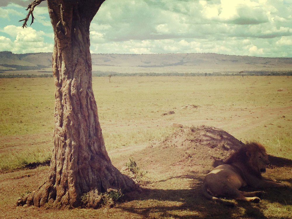 Mara_liontree4.jpg