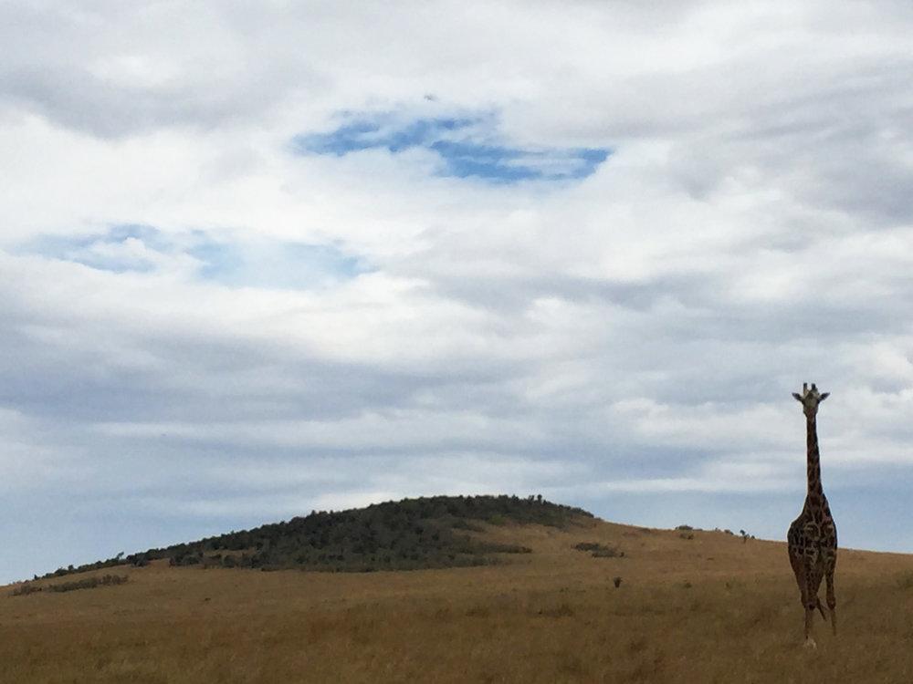 8 giraffe hill.jpg