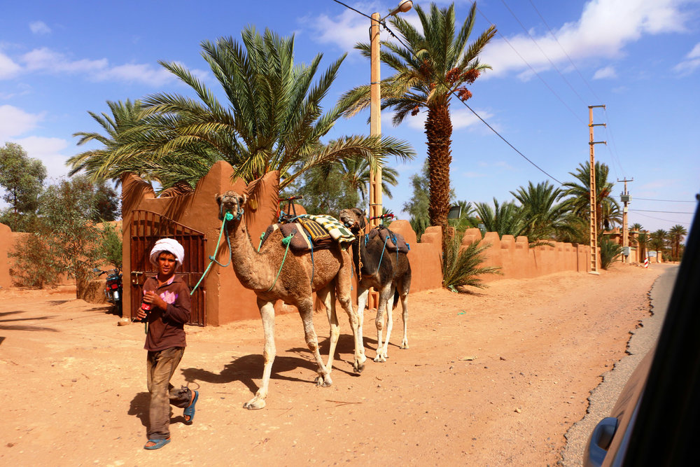 camel kid.jpg