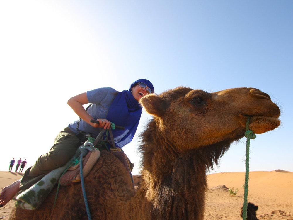 sahara camel dacia.jpg