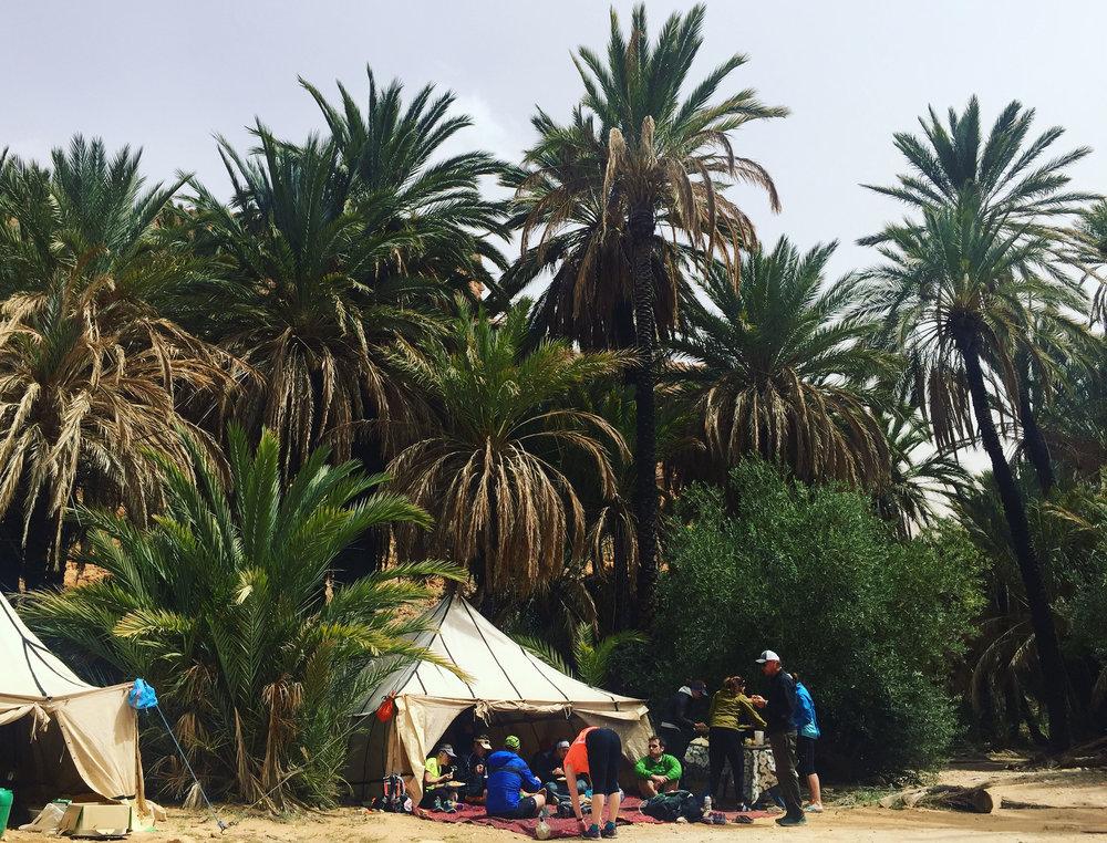 palm tree picnic.jpg