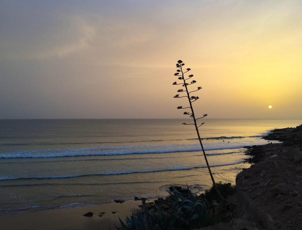 Sunset century plant.jpg