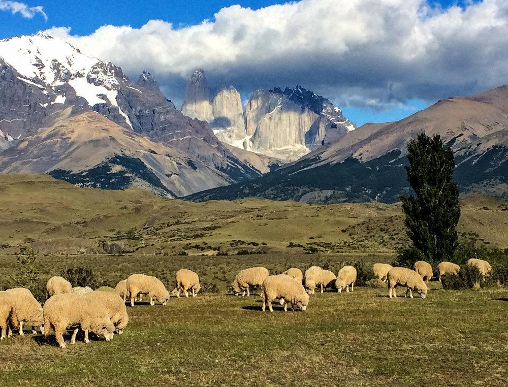 sheep towers.jpg