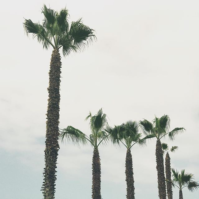 Wherever you see palms you know you're right where you need to be . #packakaftan #saltyandpine #wanderwithus