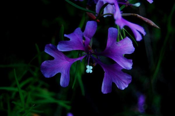 1859_wildflowers_stephanie_hinson_4.jpg