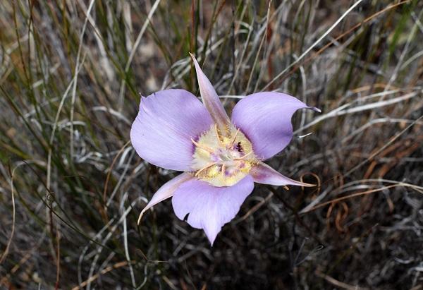 1859_wildflowers_stephanie_hinson_2.jpg