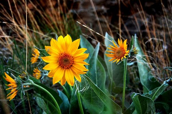1859_wildflowers_stephanie_hinson_3.jpg