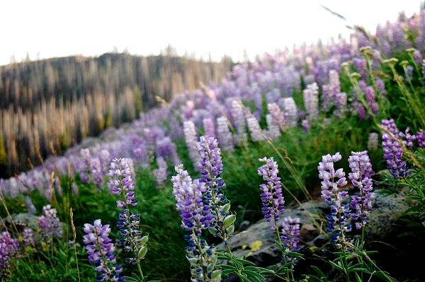 1859_wildflowers_stephanie_hinson_5.jpg
