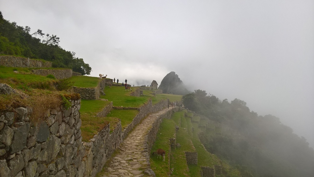 Thick morning fog at Machu Picchu