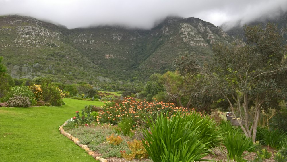A small part of the Kirstenbosch gardens on a cloudy day