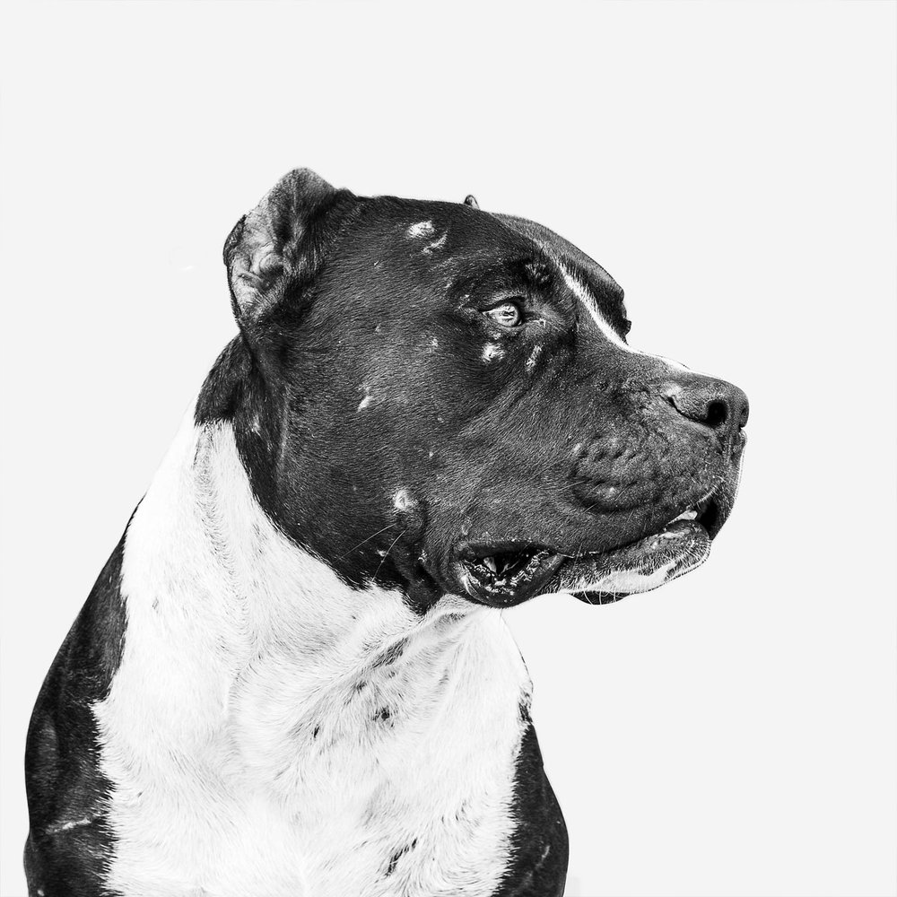 Unknown, Truck Yard Dog