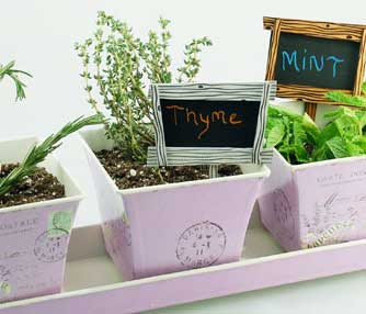 thumb-plant-signs.jpg