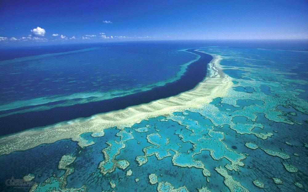 Hardy-Reef,-Great-Barrier-Reef,-Queensland.jpg