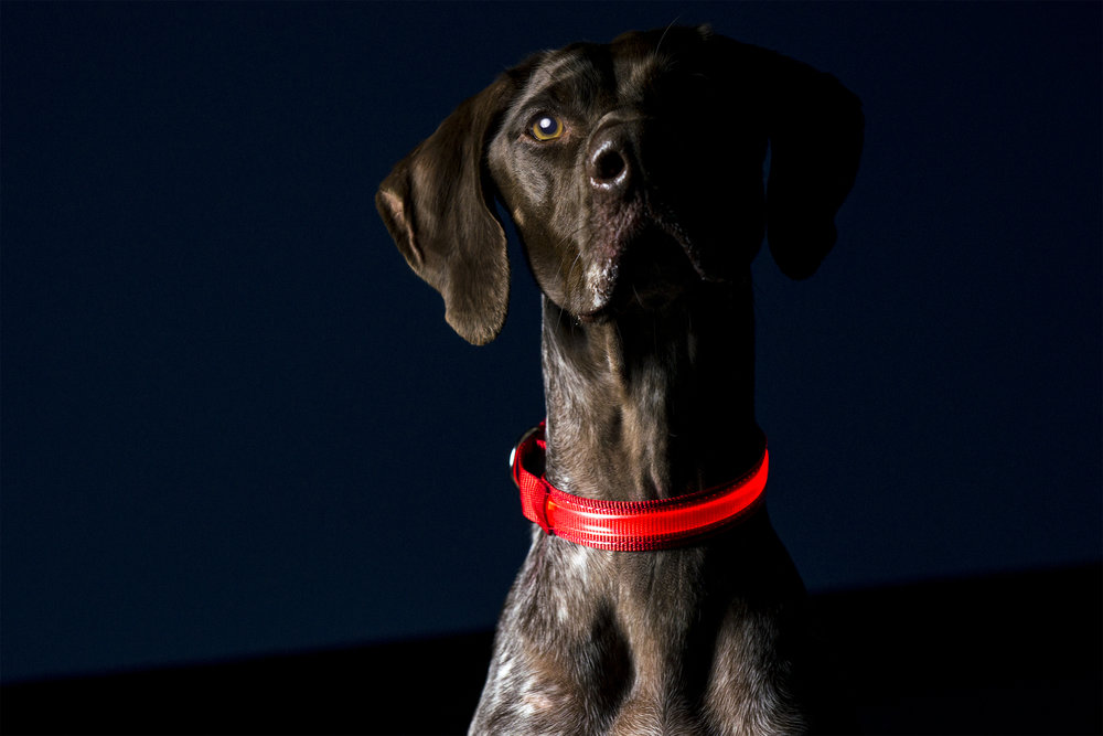LED_Collar_LG_Red_Lifestyle.jpg