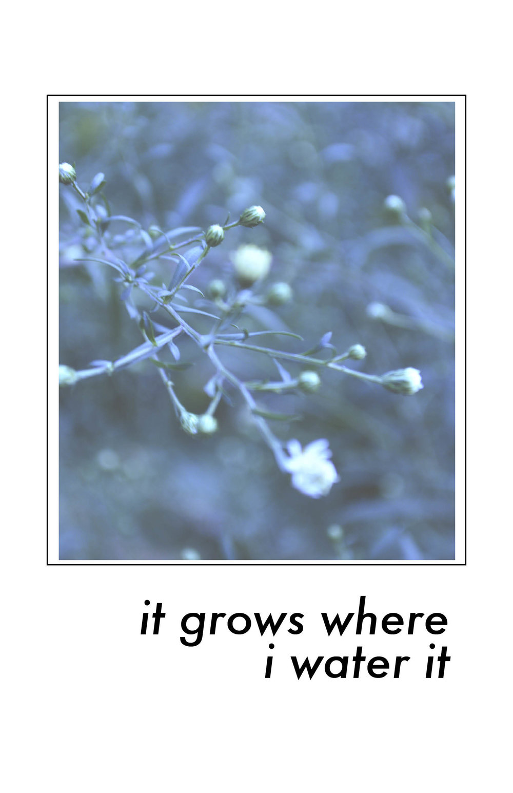 it grows where i water it - I wanted to reaffirm the idea that my focus and energy will affects the course of everything.