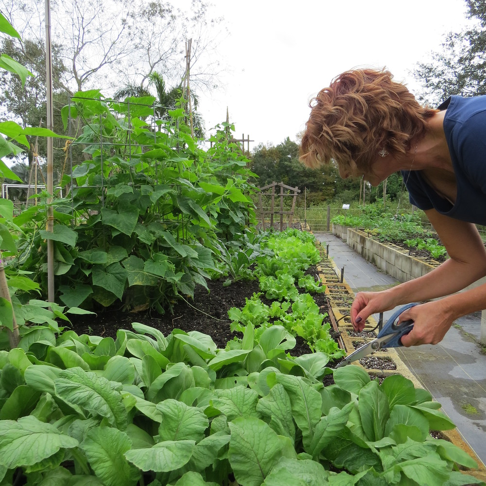 Cheryl tending to her garden in late October 2015
