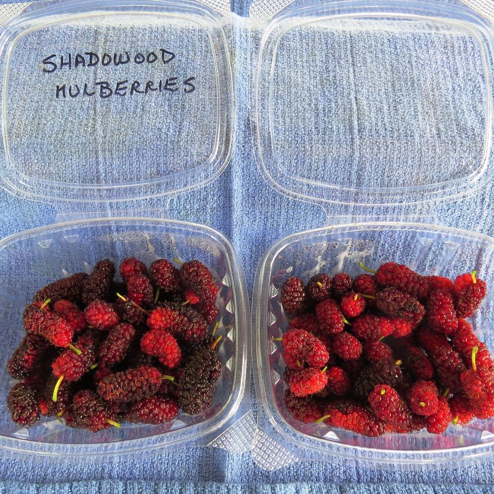 S5Market food 004.JPG