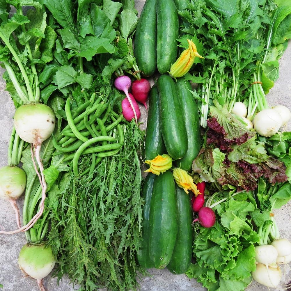 nov5 market food 004.JPG