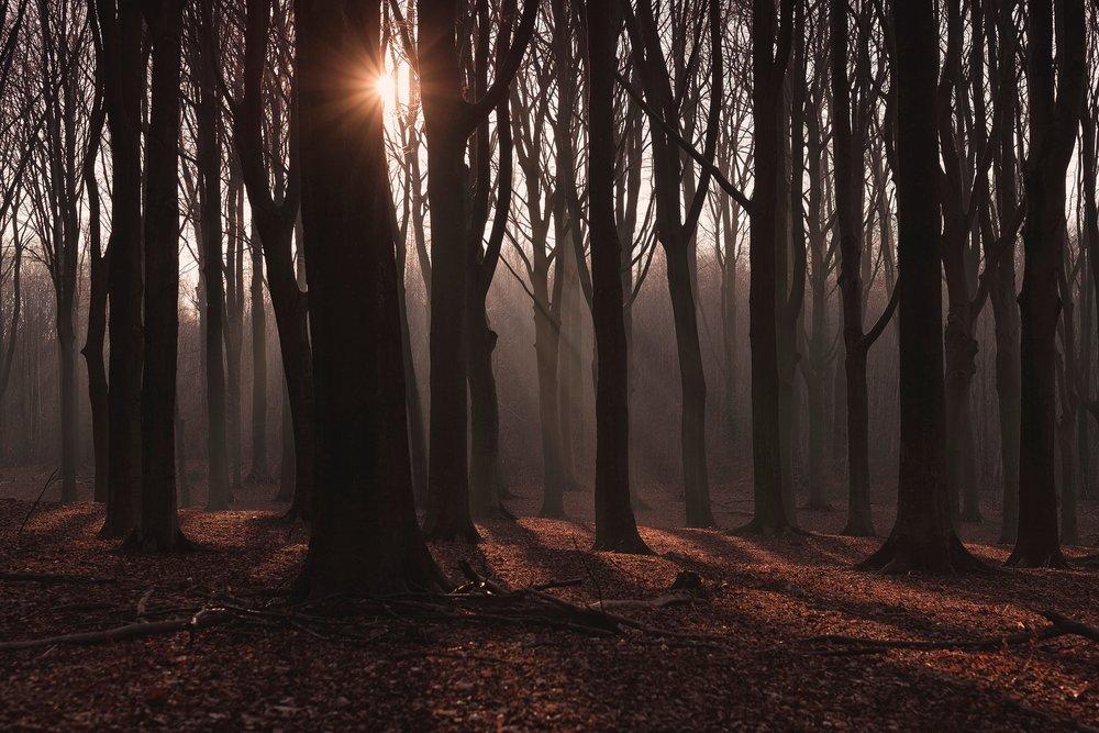 forest-2203708_1920.jpg