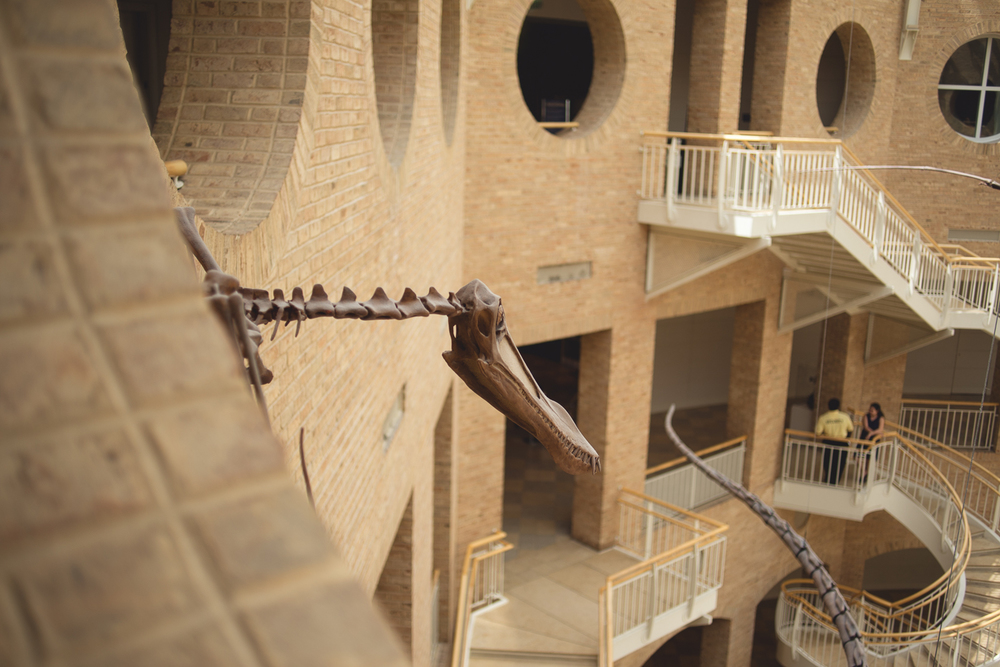 atlanta-ga-fernbank-museum-of-natural-history-travel-photography-0011