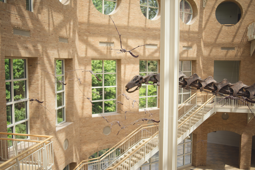 atlanta-ga-fernbank-museum-of-natural-history-travel-photography-0013