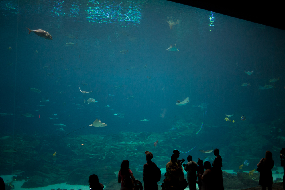 atlanta-trip-georgia-travel-photography-georgia-aquarium-photographer-0027
