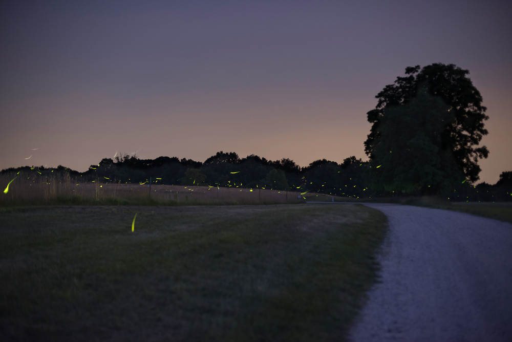 fireflies-caumet-park-long-island-long-exposure-0019