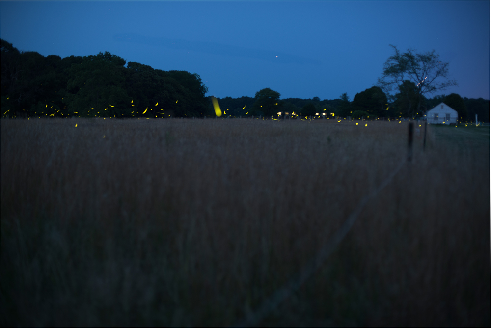 fireflies-caumet-park-long-island-long-exposure-0020