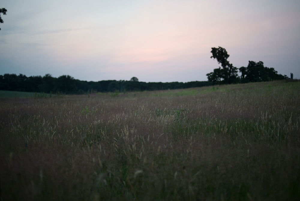 fireflies-caumet-park-long-island-long-exposure-0023