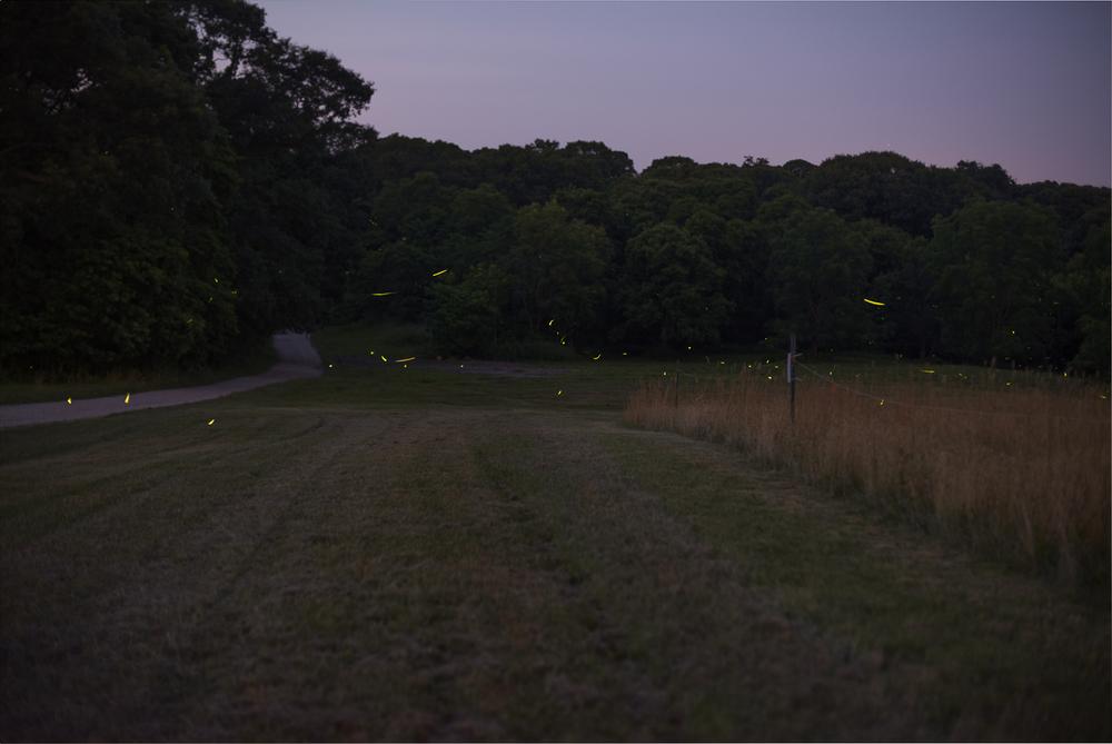 firelies-caumset-park-long-island-0017