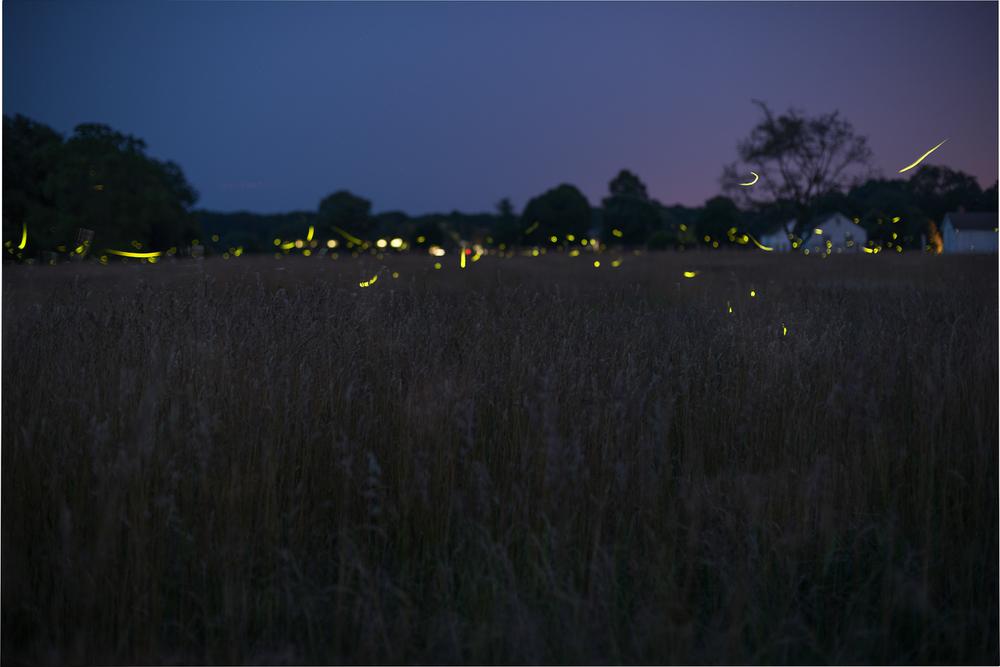firelies-caumset-park-long-island-0022