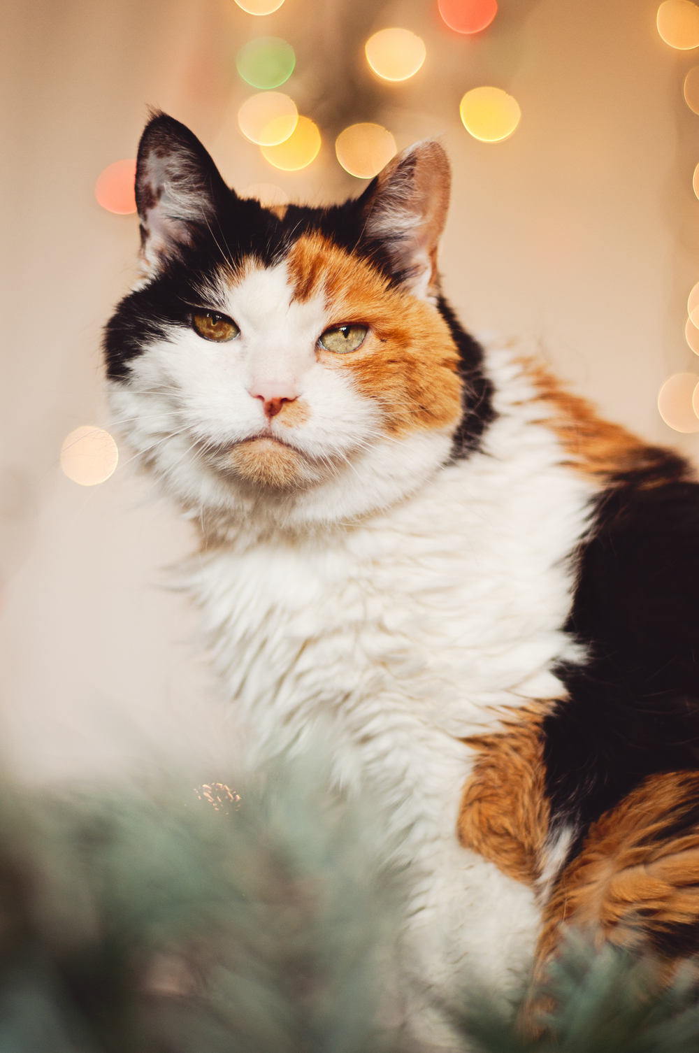 pet-photography-studio-natural-light-lifestyle-cat-holiday-long-island-photographer-digital-2.jpg