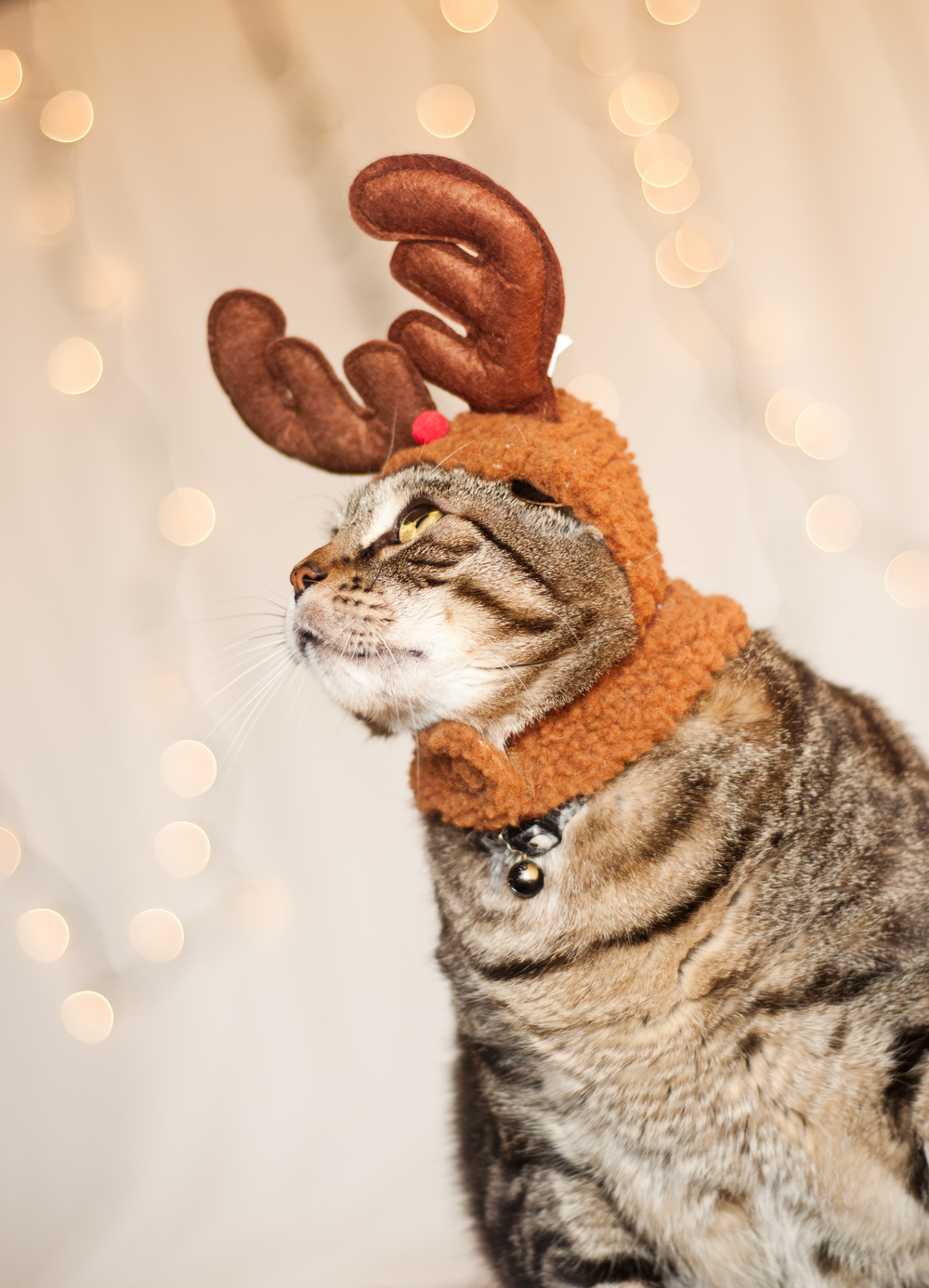 pet-photography-studio-natural-light-lifestyle-cat-reindeer-holiday-long-island-photographer-digital.jpg