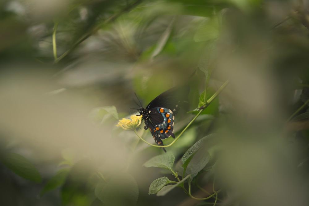 travel-photography-bronx-zoo-nyc-butterfly-long-island-ny-photographer-natural-light-digital-70.jpg