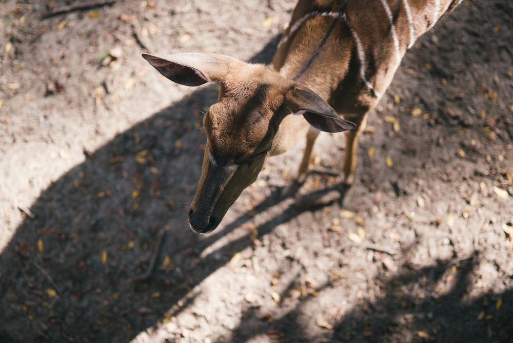 travel-photography-bronx-zoo-nyc-deer-long-island-ny-photographer-natural-light-digital-70.jpg
