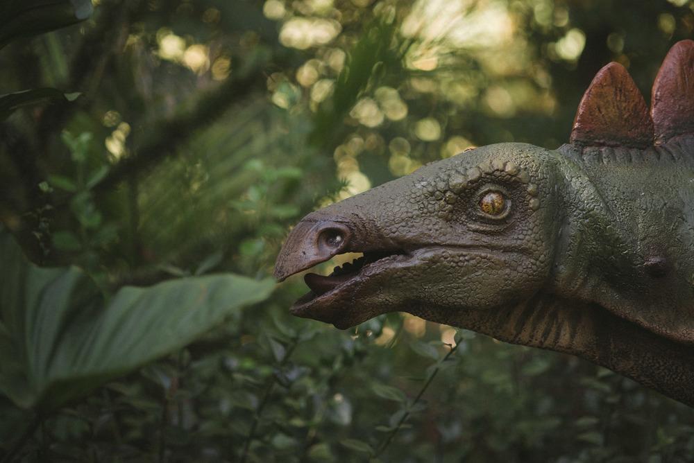 travel-photography-bronx-zoo-nyc-dinosaur-long-island-ny-photographer-natural-light-digital-70.jpg