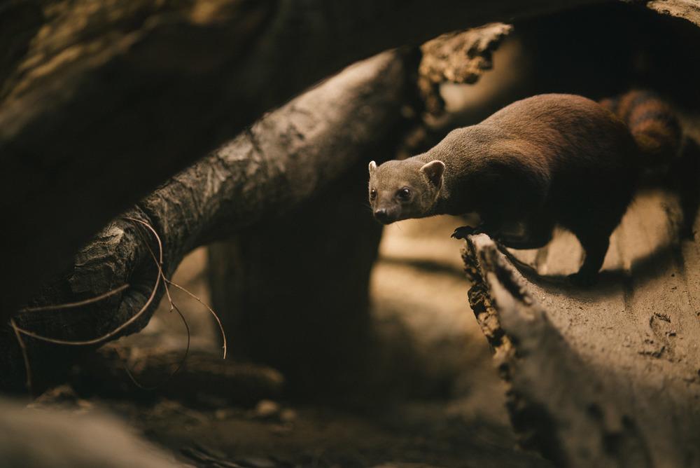 travel-photography-bronx-zoo-nyc-red-tailed-lemur-long-island-ny-photographer-natural-light-digital-70-2.jpg