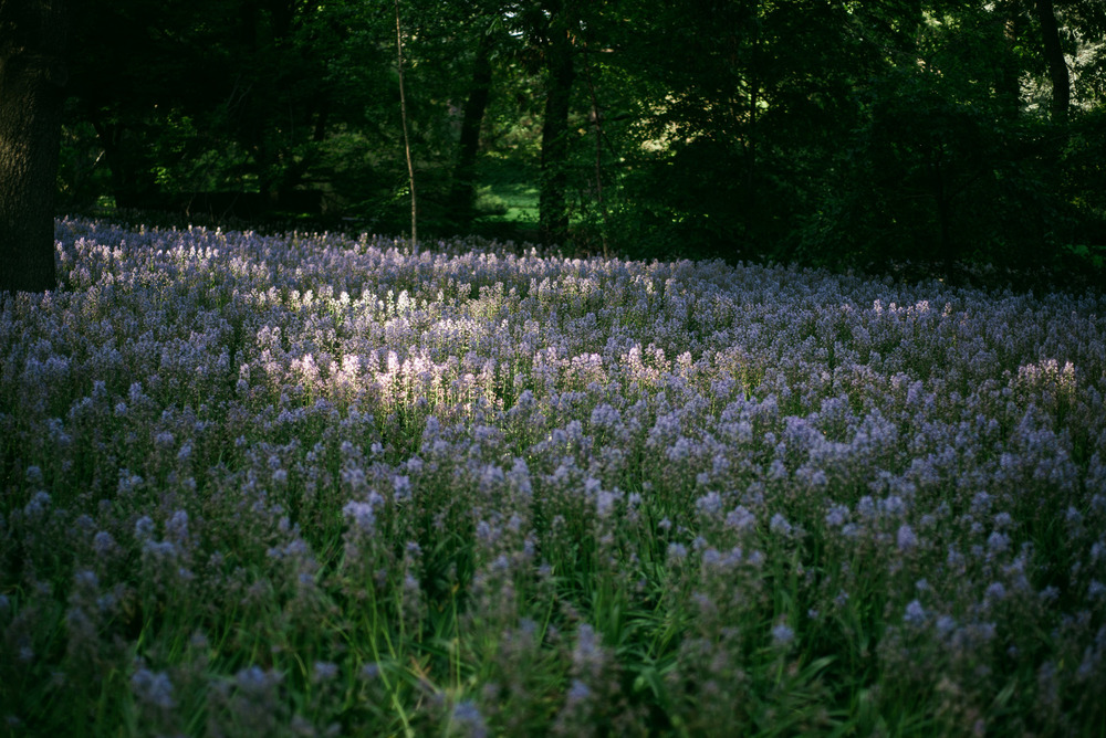 travel-photography-long-island-ny-nyc-brooklyn-botanical-garden-flowers-photographer-natural-light-digital-39.jpg