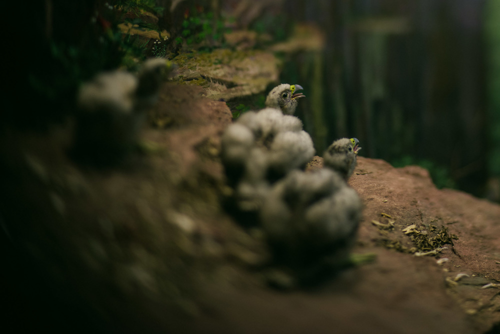 travel-photography-long-island-ny-nyc-museum-of-natural-history-diorama-lensbaby-edge-80-photographer-digital-4.jpg
