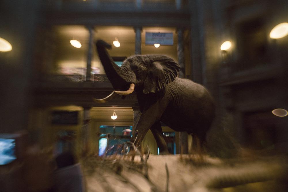 travel-photography-long-island-ny-washington-dc-national-history-musuem-elephant-lensbaby-sweet-35-photographer-natural-light-digital-17.jpg