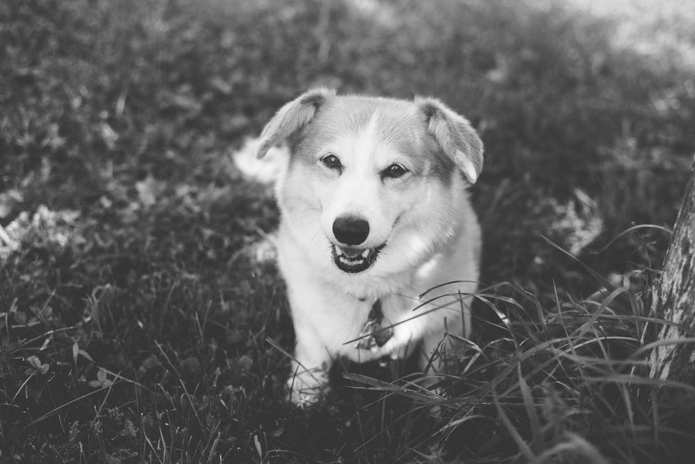 pet-photography-natural-light-lifestyle-dog-long-island-photographer-digital.jpg