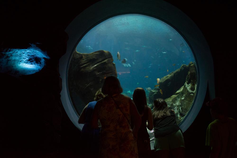 long_island_photographert_travel_atlanta_aquairum_nature_history_museum_fernbank-0004.jpg