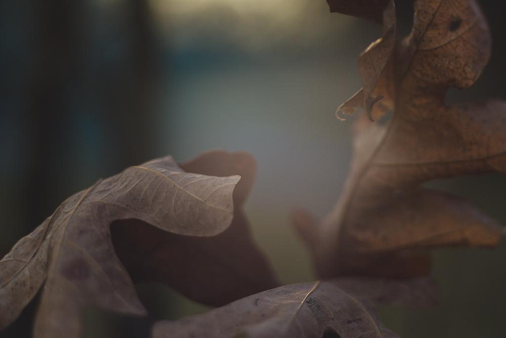 60_365-Macro_Leaves_Lensbaby-106.jpg