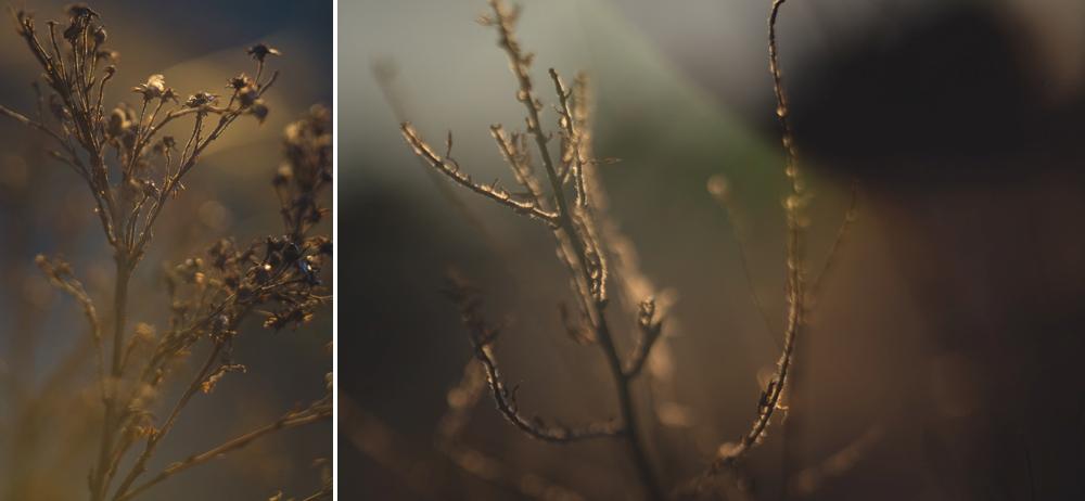 dead-sticks-macro-collage.jpg