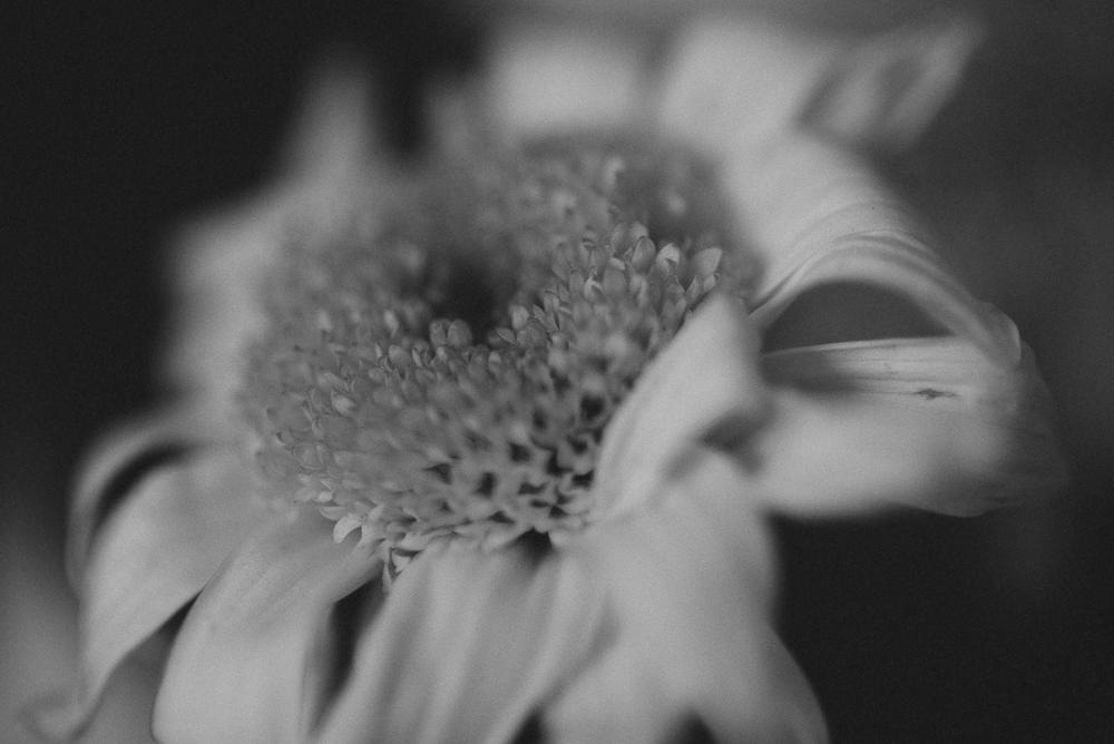 96_366-Rainy_Day_Bouquet-005.jpg