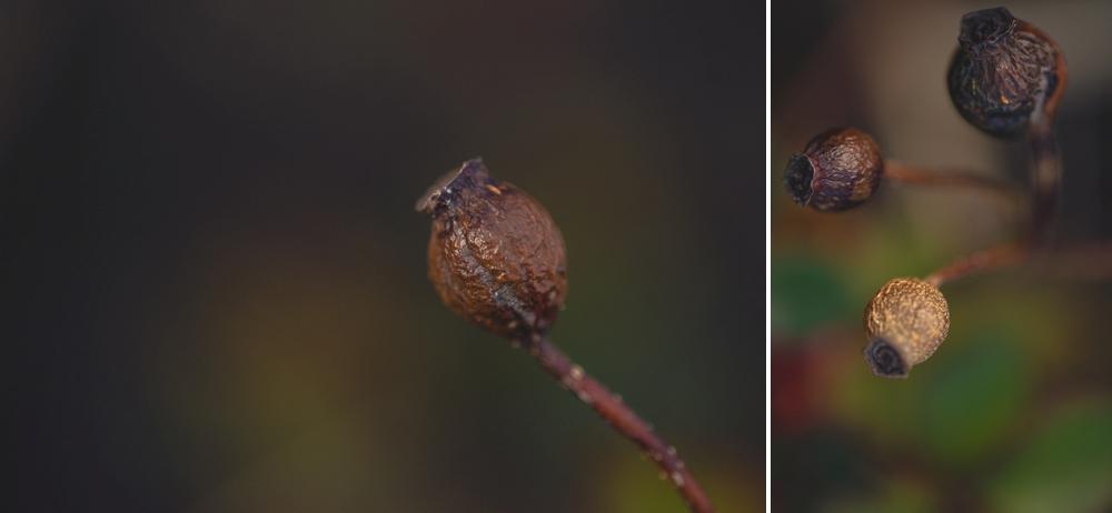 dead-seads-macro-collage.jpg