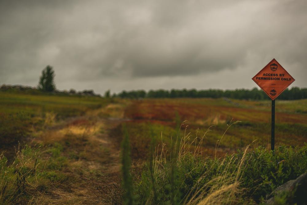 clarry_hill_trail_Maine-045.jpg