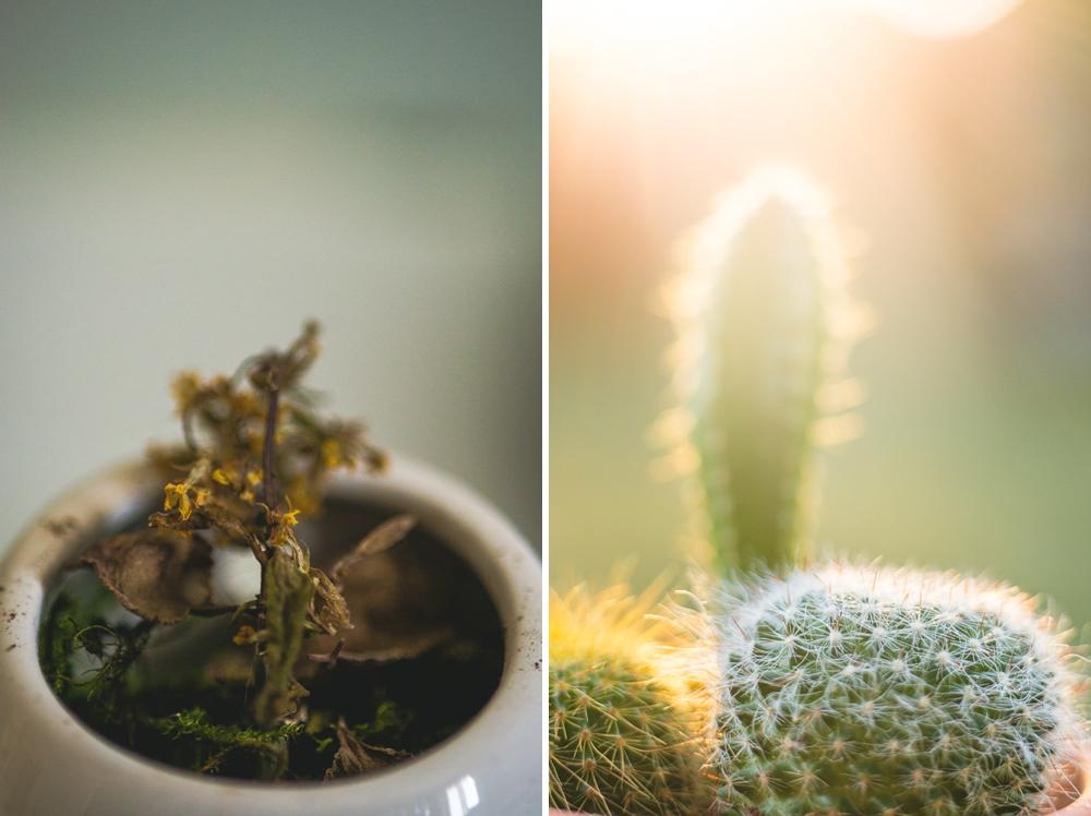 cactus_dead_plant.jpg