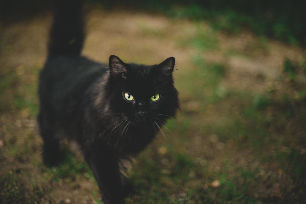 cat_photography_natural_light_long_island_ny_photographer-1.jpg