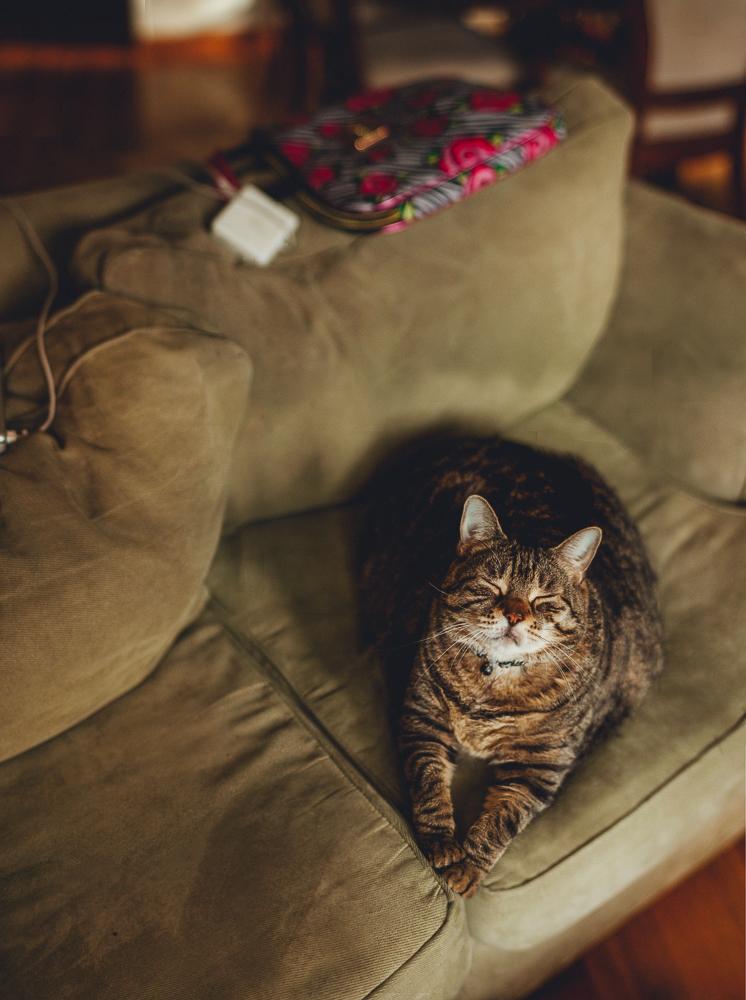 fatass_pet_cat_photography_brenizer_panorama_lifestyle_long_island_photographer-1.jpg